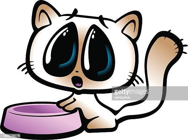 cute kitty begging near an empty bowl - cat food stock illustrations