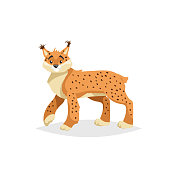 Cute lynx. Cartoon comic style vector illustration of forest wild animal. Bobcat. Europe and north America animal.