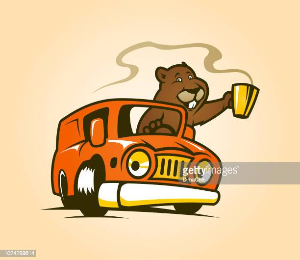 cute marmot cartoon character with cup of coffee or tea drives a car - breakfast cartoon stock illustrations