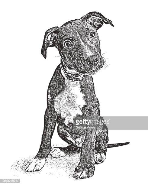 cute mixed breed terrier puppy hoping to be adopted - naughty america stock illustrations