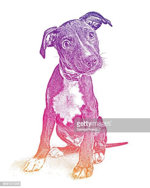 Niedliche Mischling Terrier Welpen in der Hoffnung, angenommen werden