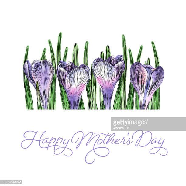 cute mother's day border of crocus flowers watercolor and ink vector illustration - mothers day text art stock illustrations