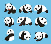 cute panda baby set, flat design, vector illustrator