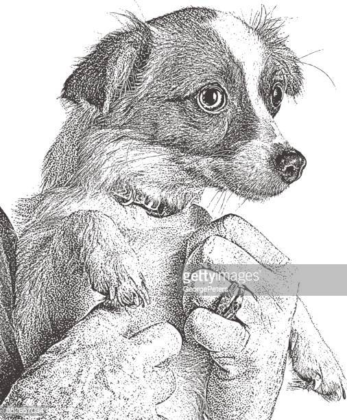 Cute Puppy held by a senior woman, Papillon