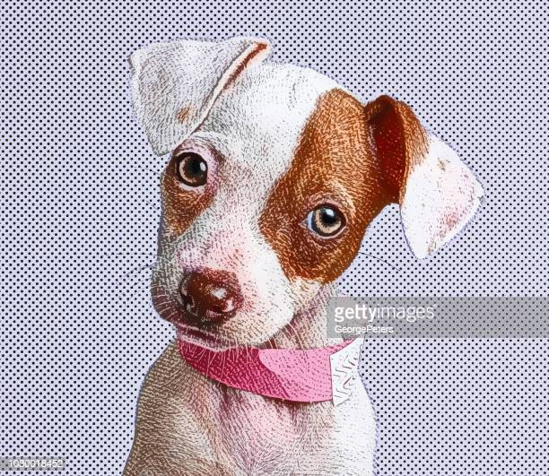 Cute Puppy Jack Russell Terrier dog in animal shelter