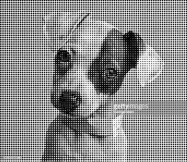 cute puppy jack russell terrier dog in animal shelter - dog pound stock illustrations
