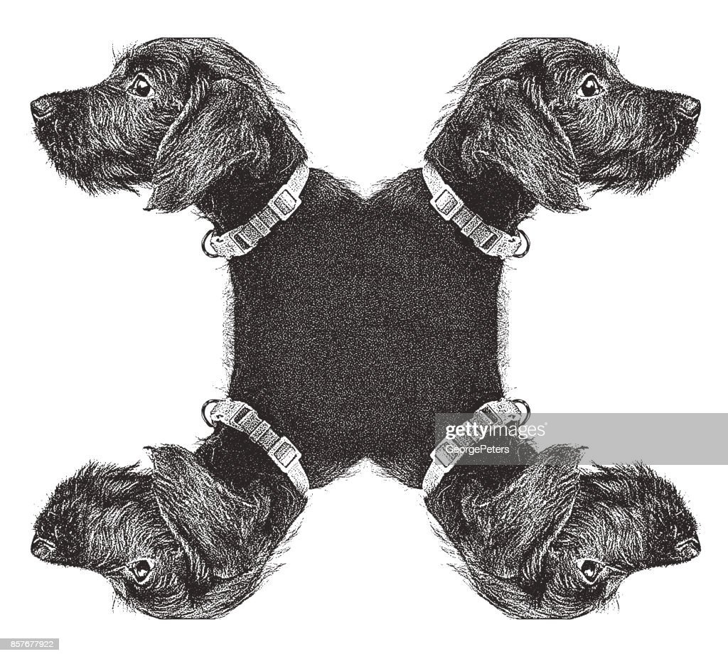 Cute Puppy waiting to be adopted. Miniature Schnauzer, mixed-breed dog.