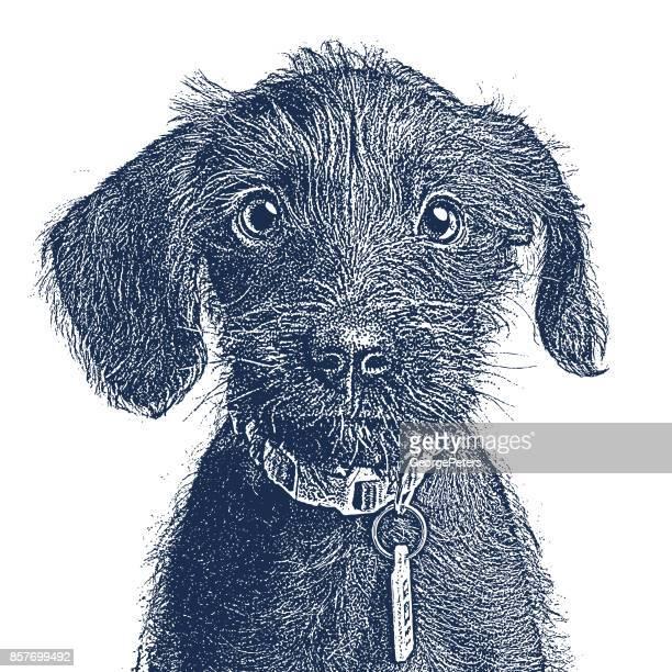 かわいい子犬が採用されるを待っています。ミニチュア ・ シュナウザー、雑種犬。