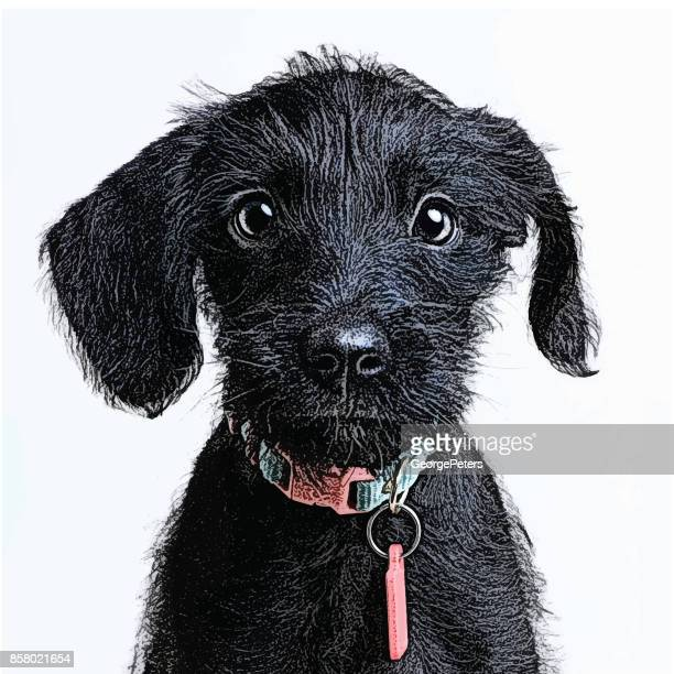 cute puppy waiting to be adopted. miniature schnauzer, mixed-breed dog. - cute stock illustrations