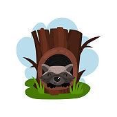 Cute raccoon sitting in hollow of tree, hollowed out old tree and animal inside vector Illustration on a white background