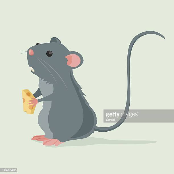 cute rat holding a piece of cheese - rat stock illustrations, clip art, cartoons, & icons