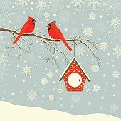 Cute red cardinal bird