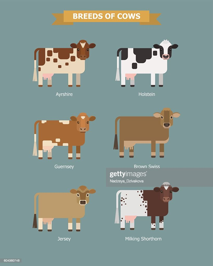 Cute vector cows