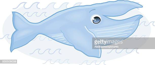 cute whale (humpbackwhale/buckelwal) - blue whale stock illustrations, clip art, cartoons, & icons
