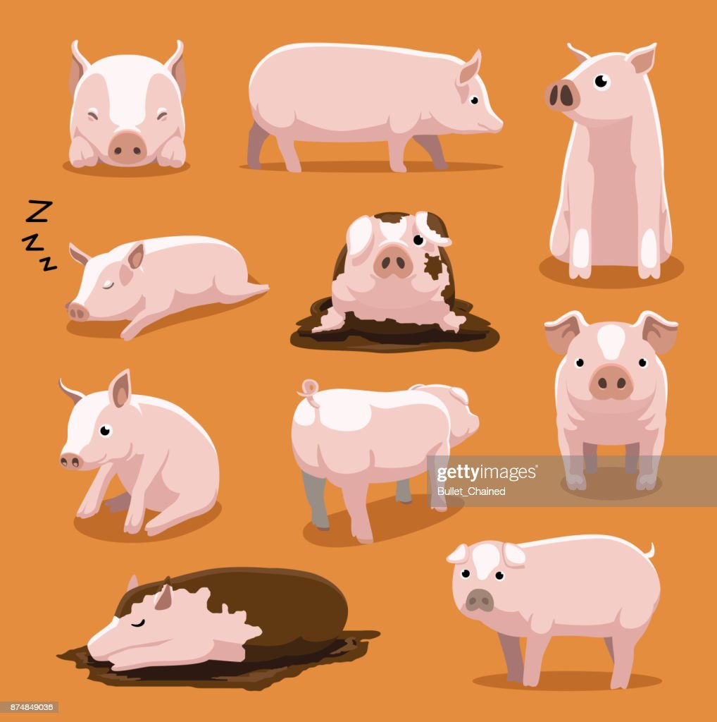 Cute White Pig Cartoon Poses Vector Illustration