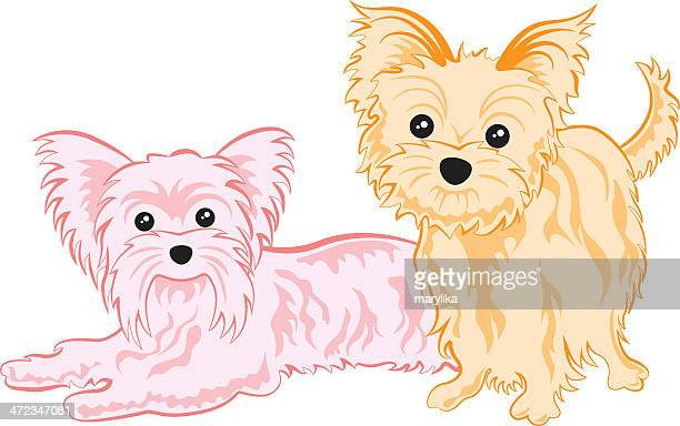 cute yorkshire terriers - yorkshire terrier stock illustrations