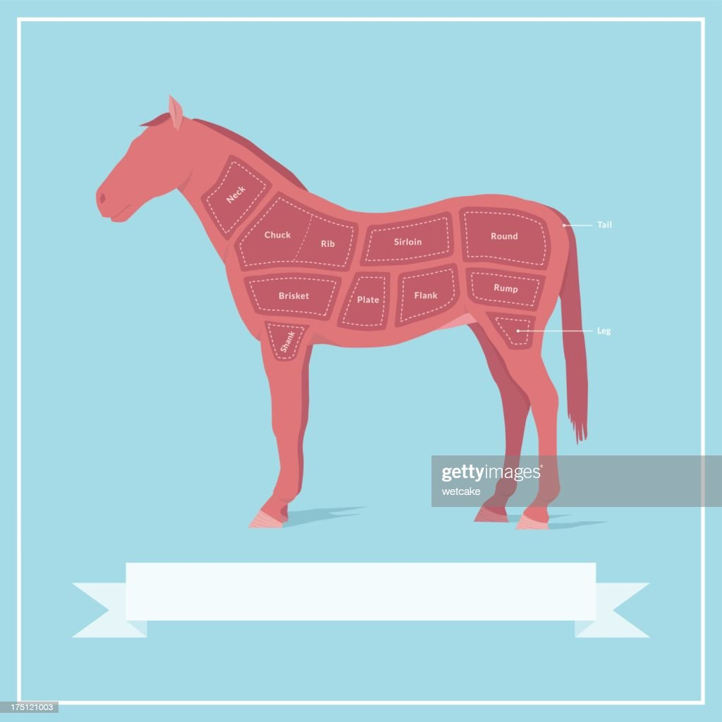 Cuts of Horse Meat : stock illustration