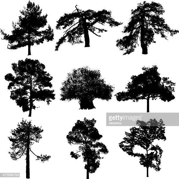Cyprys árboles