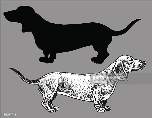 dachshund - dog, domestic pet - dachshund stock illustrations
