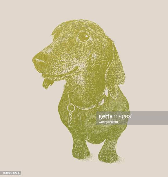 dachshund dog in animal shelter hoping to be adopted - desaturated stock illustrations, clip art, cartoons, & icons