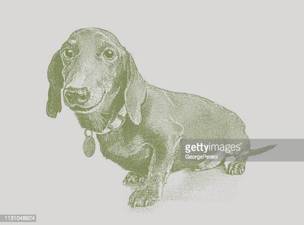 養子縁組を希望する動物シェルターのダックスフンド犬 - カーキグリーン点のイラスト素材/クリップアート素材/マンガ素材/アイコン素材