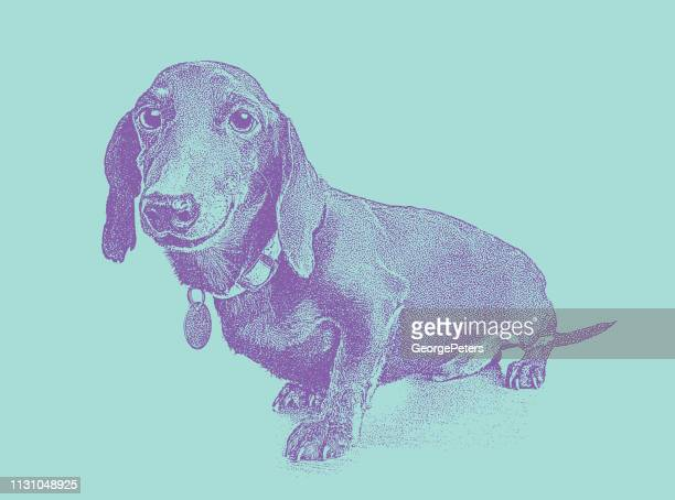dachshund dog in animal shelter hoping to be adopted - pet equipment stock illustrations, clip art, cartoons, & icons