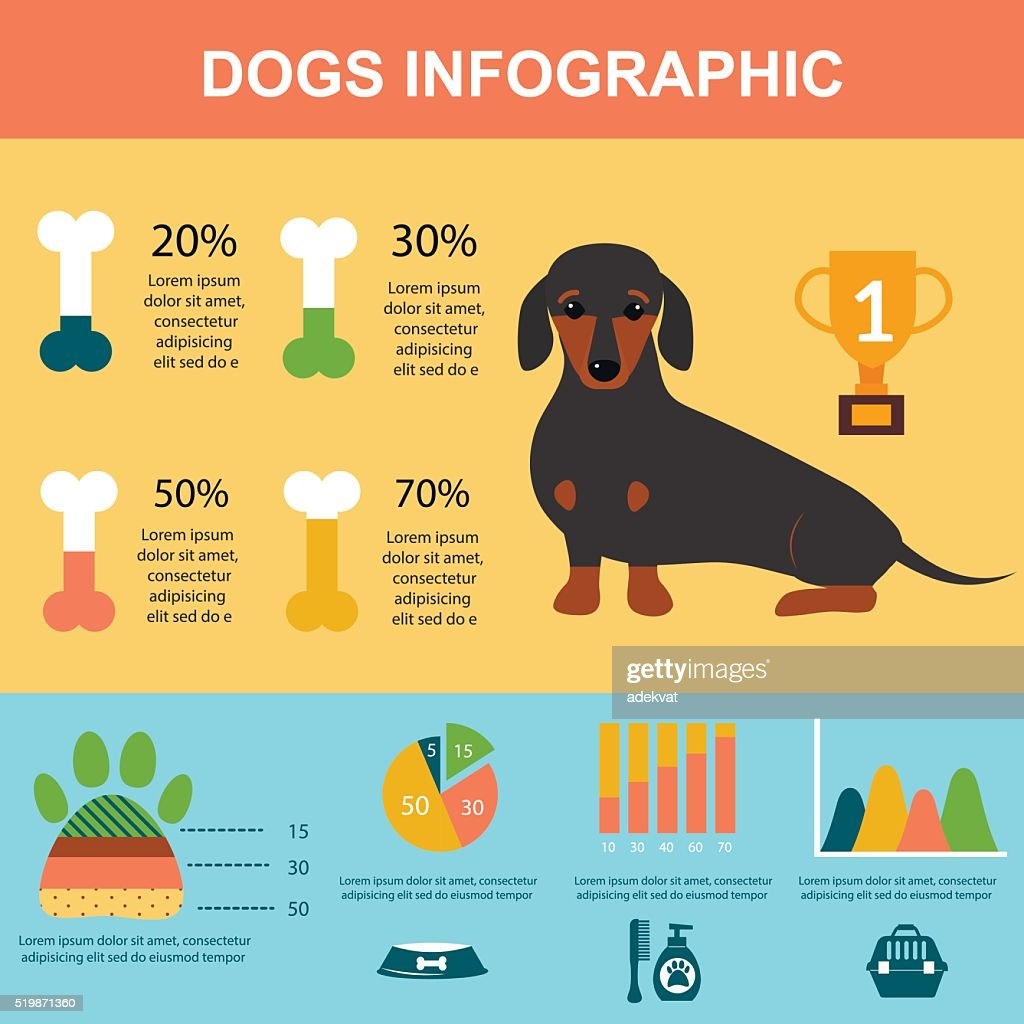 Dachshund dog playing infographic vector presentation symbols set
