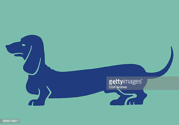 dachshund - best in show stock illustrations