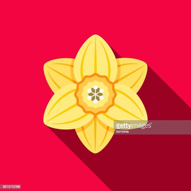 daffodil flat design gardening icon with side shadow - daffodil stock illustrations, clip art, cartoons, & icons