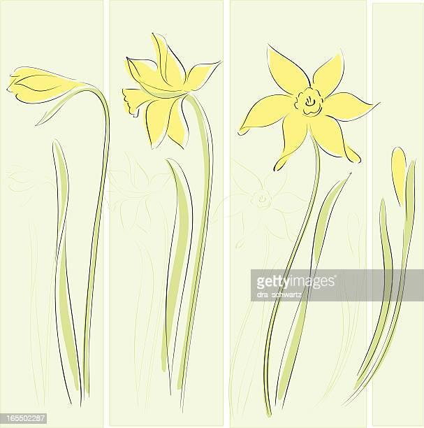 daffodil - daffodil stock illustrations, clip art, cartoons, & icons