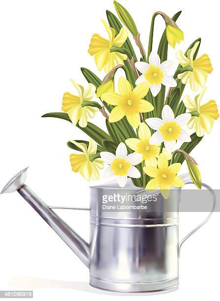 daffodils in a watering can - daffodil stock illustrations, clip art, cartoons, & icons