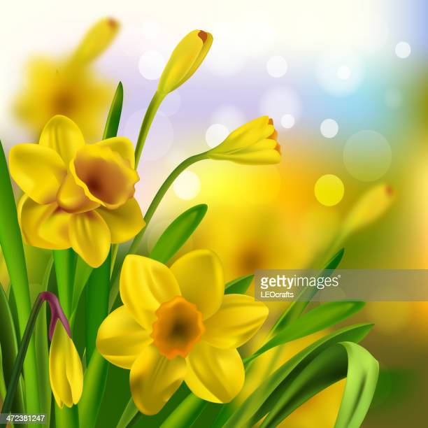 daffodils - daffodil stock illustrations, clip art, cartoons, & icons