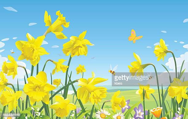 daffodils - springtime stock illustrations, clip art, cartoons, & icons