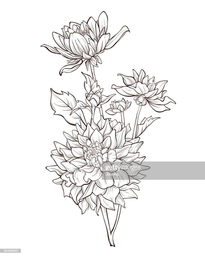 Dahlia flowers. Vintage hand drawing background with flowers.