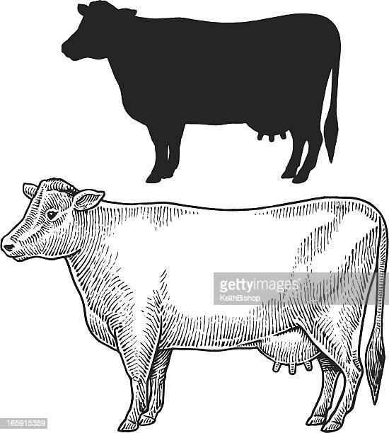 dairy cow - farm animal, livestock - cow stock illustrations
