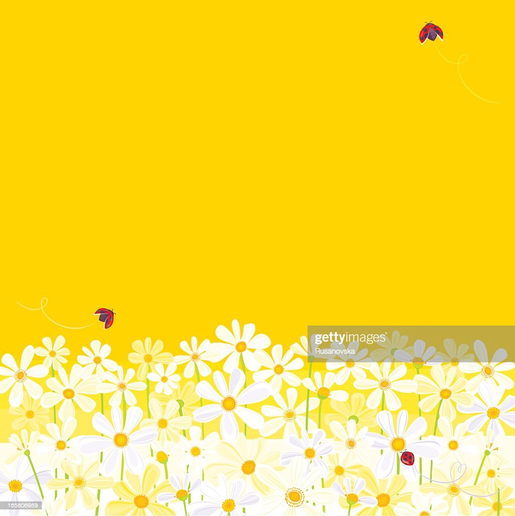 Daisies against yellow background with flying ladybugs : stock illustration