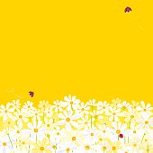 Daisies against yellow background with flying ladybugs