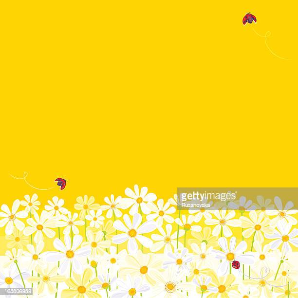 daisies against yellow background with flying ladybugs - daisy stock illustrations, clip art, cartoons, & icons