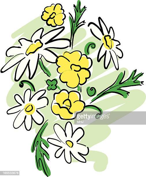 daisies and buttercups in a sketchy hand drawn style - ranunculus stock illustrations, clip art, cartoons, & icons