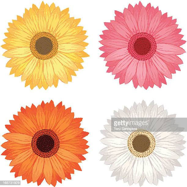 daisies by hand-drawn - gerbera daisy stock illustrations, clip art, cartoons, & icons
