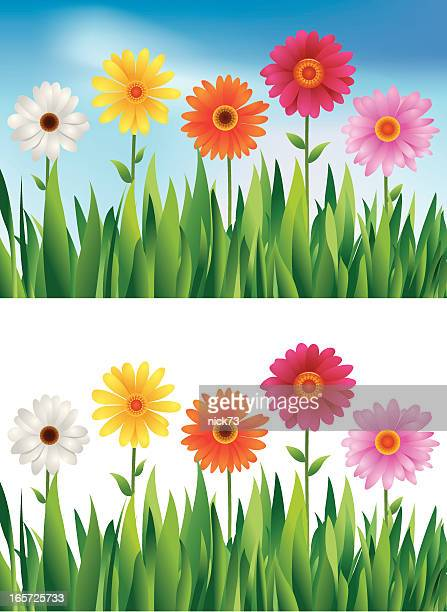 daisies floral background - gerbera daisy stock illustrations, clip art, cartoons, & icons