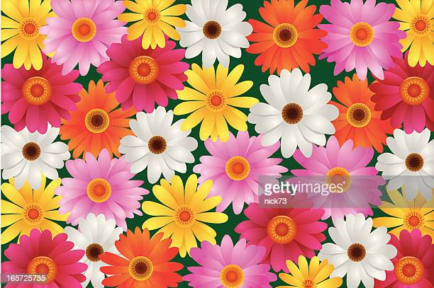 daisies floral pattern - gerbera daisy stock illustrations, clip art, cartoons, & icons
