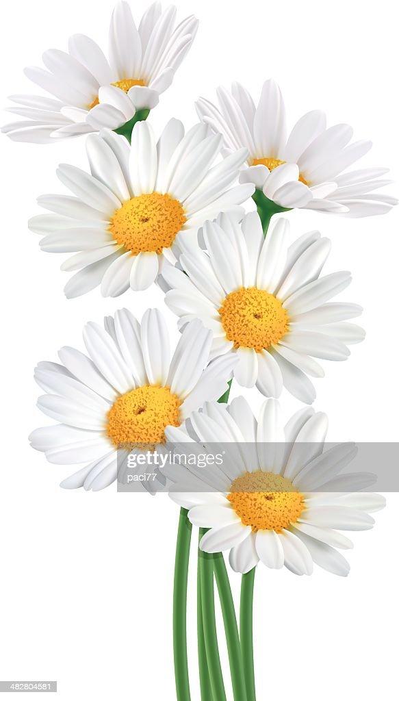 Daisy Bouquet (Vector)