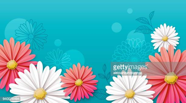 daisy flower background - springtime stock illustrations