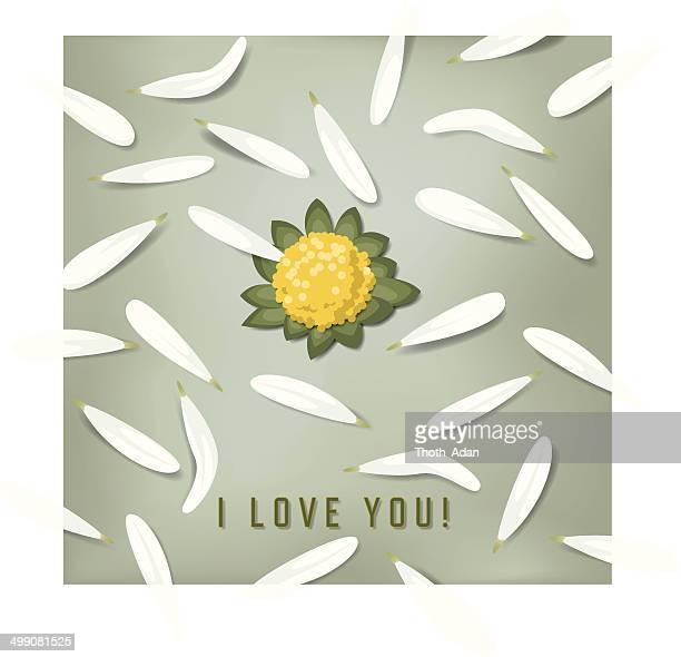 Daisy, I love you! (Loves me, loves me not …)