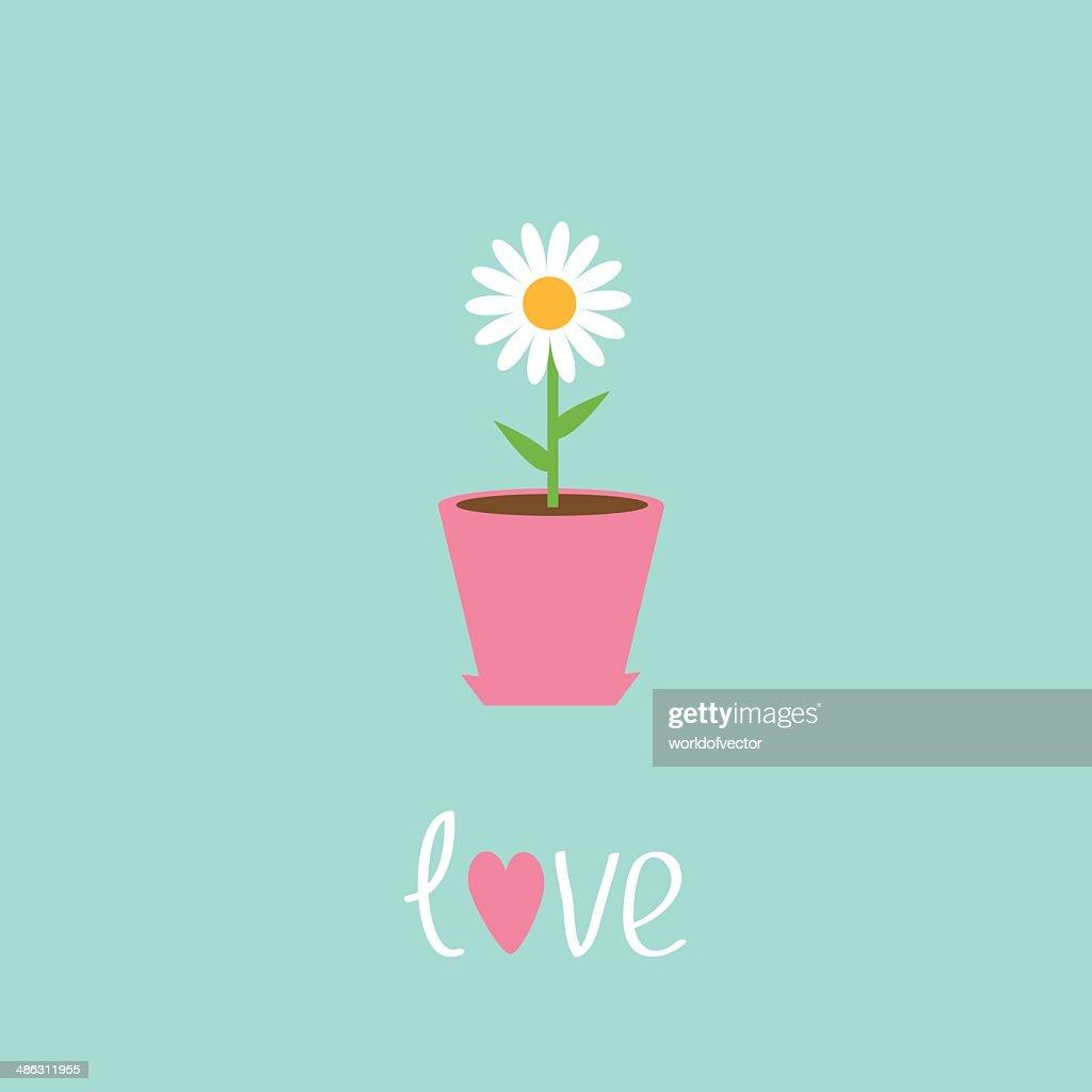 Daisy in pot. Love card.