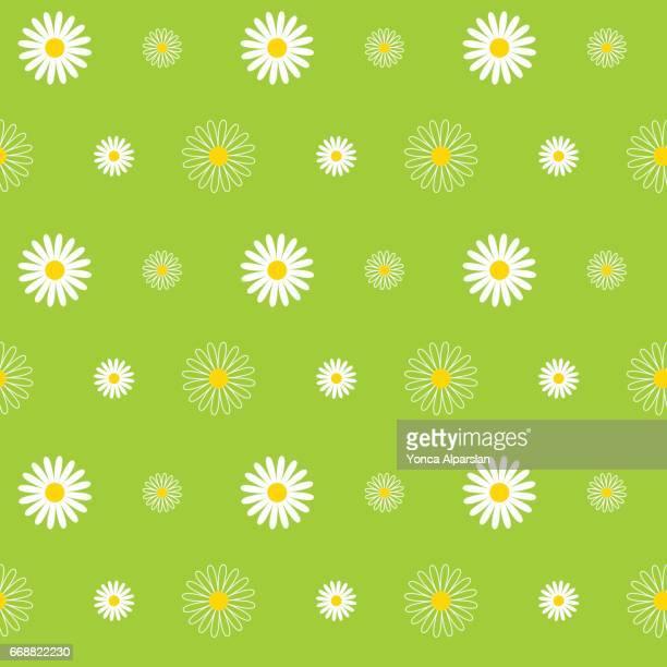 daisy seamless pattern - daisy stock illustrations
