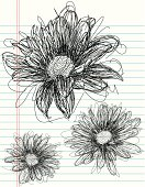 Daisy sketches
