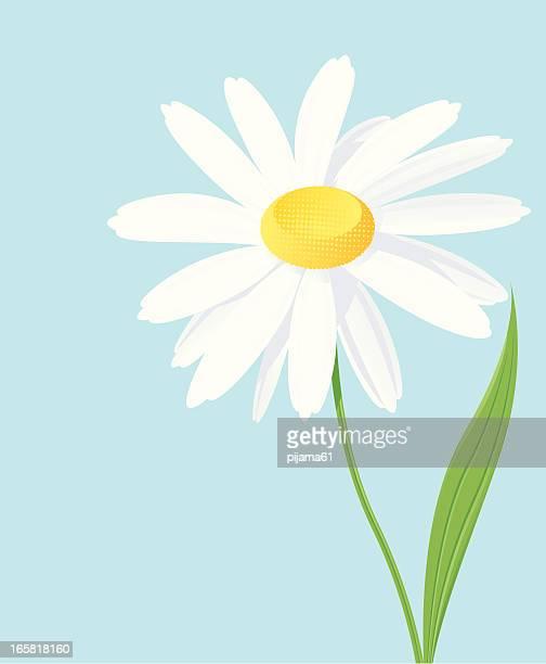 daisy - daisy stock illustrations