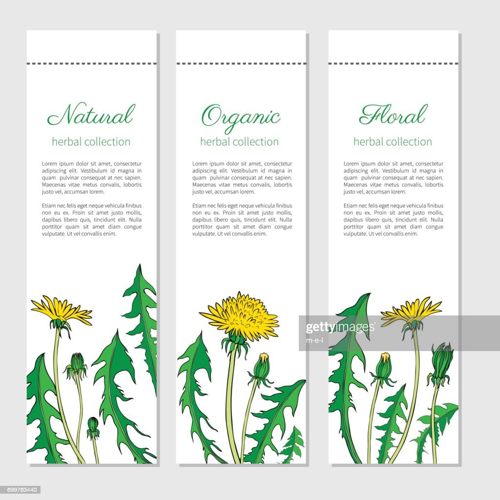 Dandelion flower, bud, leaf hand drawn vector ink colorful sketch isolated on white background, Vector vertical banners, graphic floral label sticker for cosmetic, design package tea, medicine plant